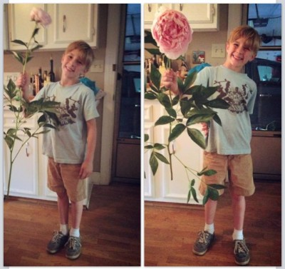 This was the day Charlie went to (with permission of our neighbor) snip a peony from his bush. I told Charlie to cut the flower far enough down the stem so we would have stem for the vase. He returned with this.