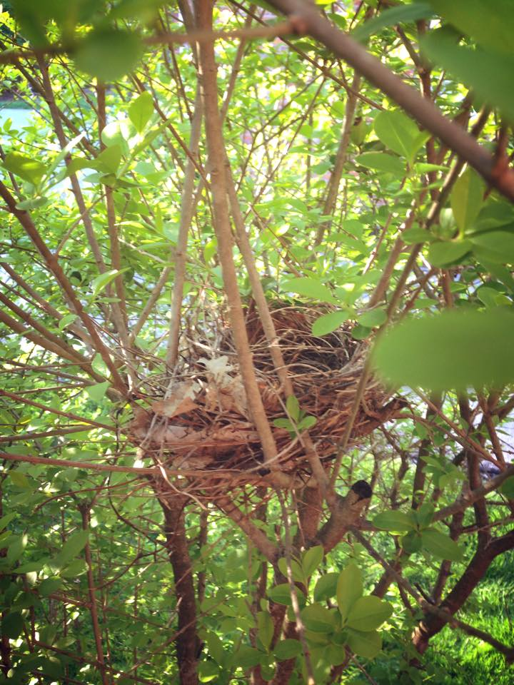 beginning_empty_nest