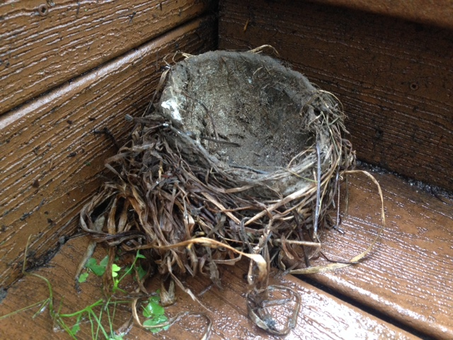 Her nest that had been blown from its branches, a displaced home.
